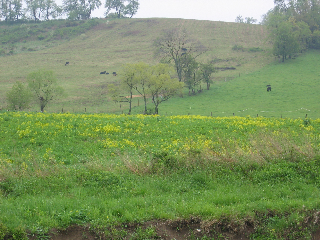 a-look-at-the-pasture-in-may