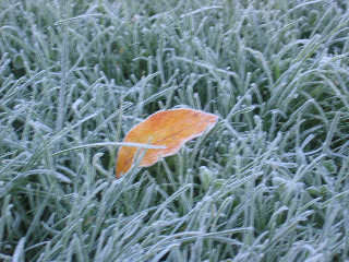 First autumn frost.